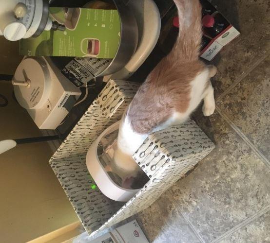 pets technology - Cat - Triplex Jack