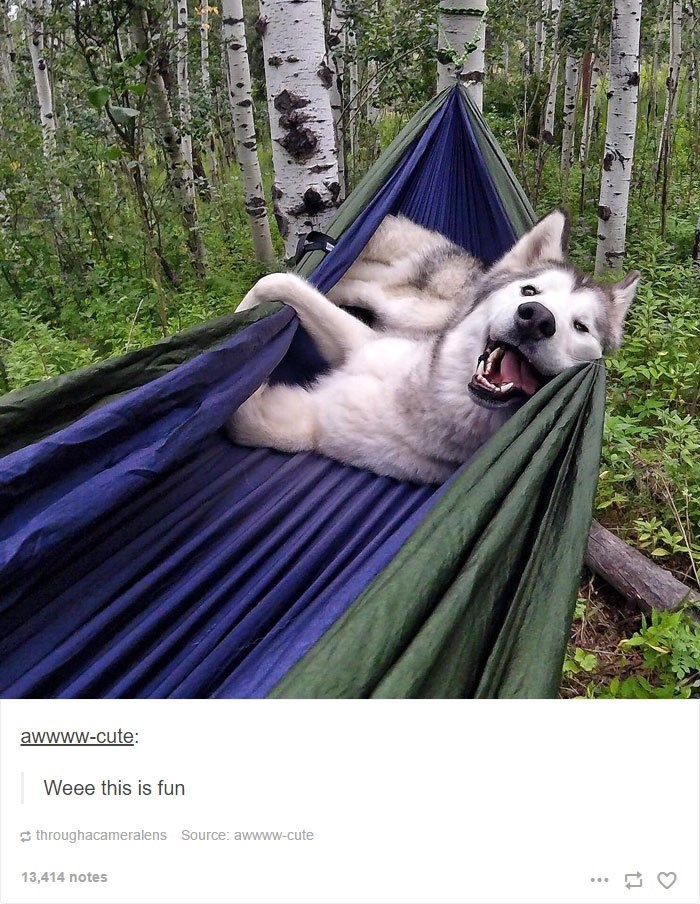 Hammock - awwww-cute: Weee this is fun throughacameralens Source: awwww-cute 13,414 notes