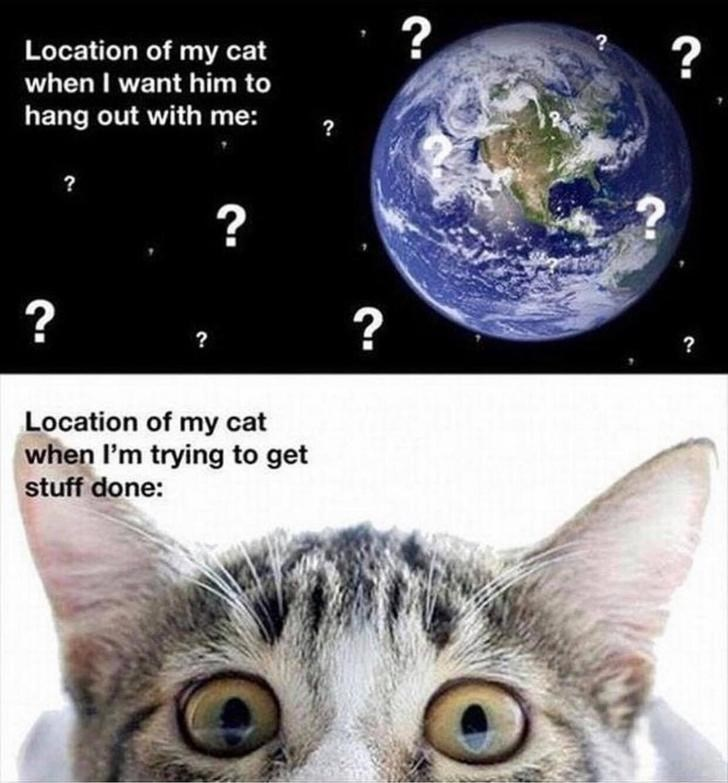 Memes Cats funny distraction Lost Cat hiding planet - 9329091072