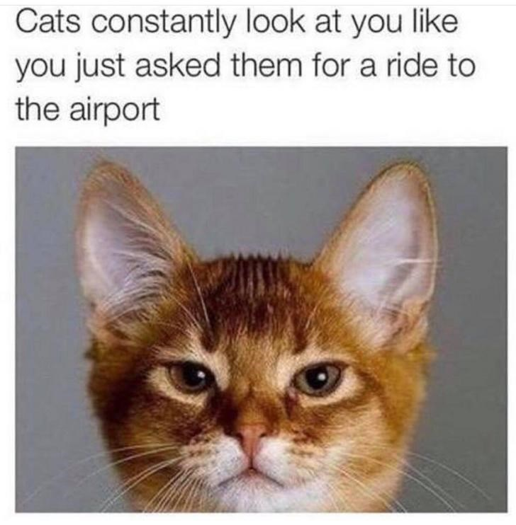 Memes Cats funny ride airport facial expressions funny face - 9329092864