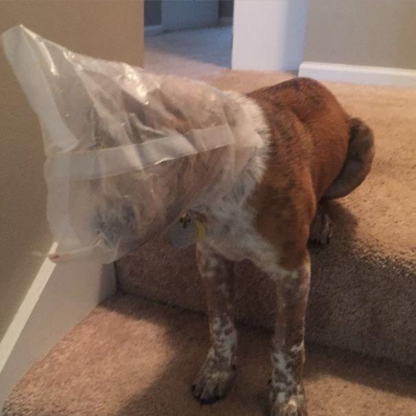 dog got his head stuck in a bag