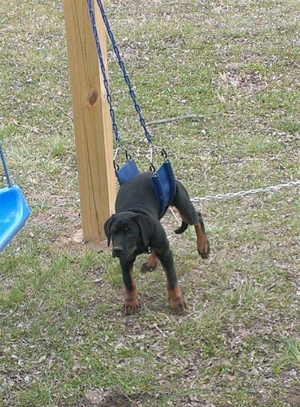 Dog stuck in a swing