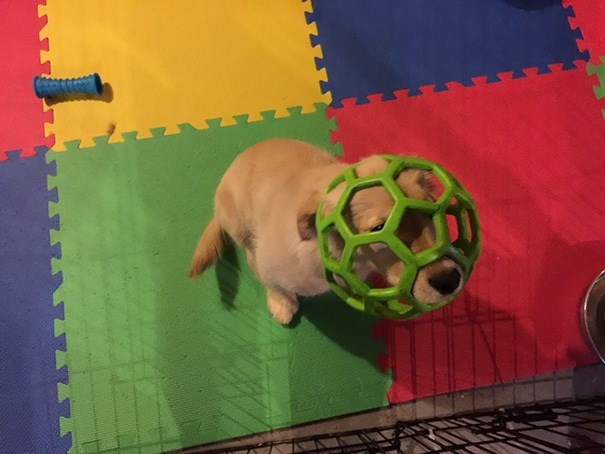 dog stuck in a plastic ball