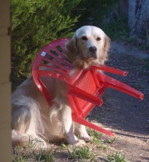 Dog stuck in a red plastic chair