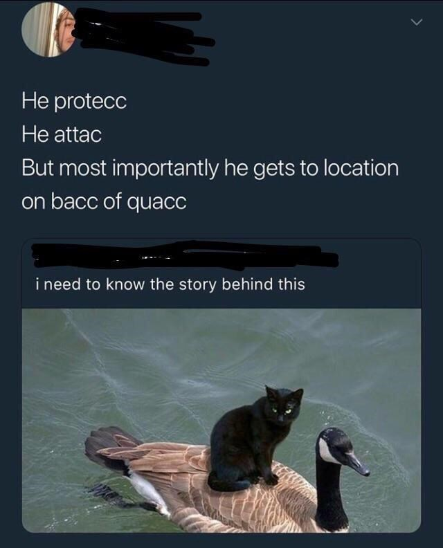 """Tweet - """"He protecc He attac But most importantly he gets to location on bacc of quacc i need to know the story behind this"""""""