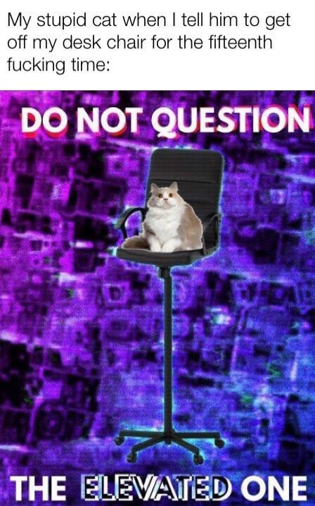 Meme - Purple - My stupid cat when I tell him to get off my desk chair for the fifteenth fucking time: DO NOT QUESTION THE ELEVATED ONE