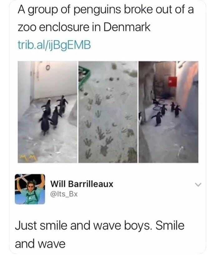 meme - Text - A group of penguins broke out of a zoo enclosure in Denmark trib.al/jBgEMB Will Barrilleaux @lts Bx Just smile and wave boys. Smile and wave