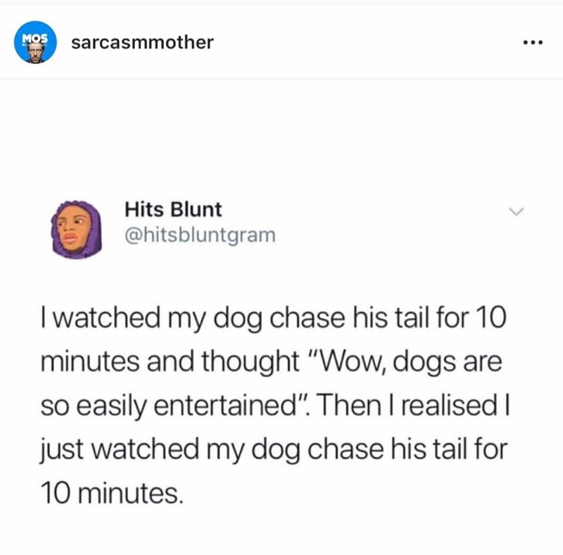 """meme - Text - MOS sarcasmmother Hits Blunt @hitsbluntgram Iwatched my dog chase his tail for 10 minutes and thought """"Wow, dogs are so easily entertained"""". Then I realised I just watched my dog chase his tail for 10 minutes."""
