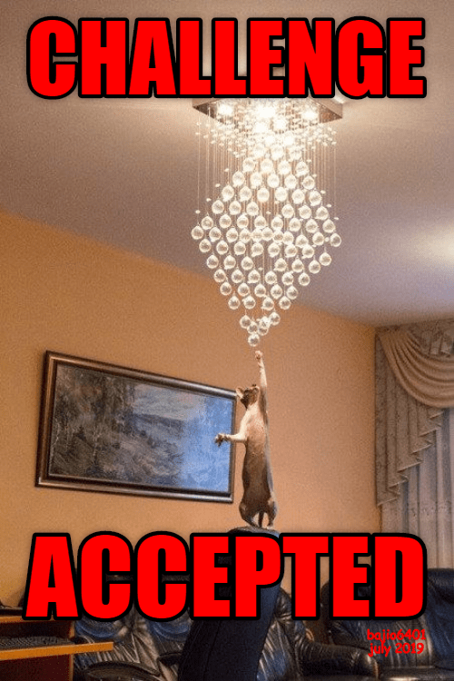cat reaching to touch a dangling ceiling lamp