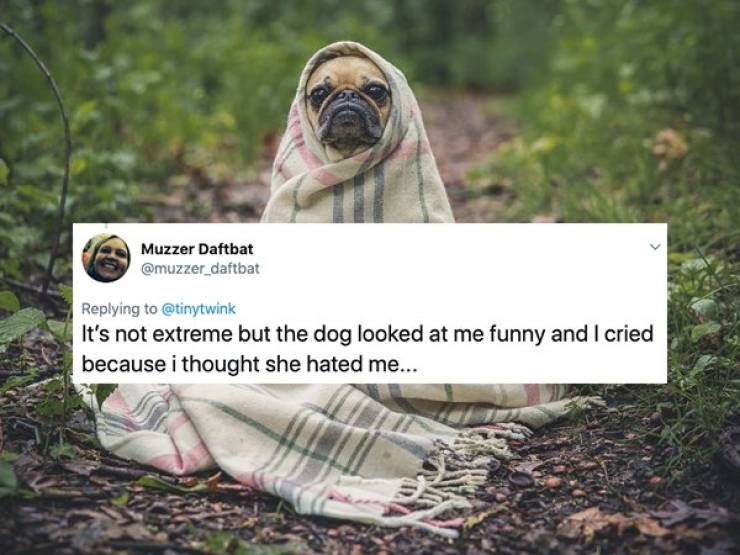 hormones women - Pug - Muzzer Daftbat @muzzer daftbat Replying to@tinytwink It's not extreme but the dog looked at me funny andI cried because i thought she hated me....