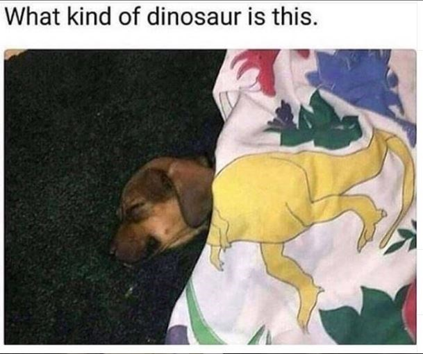 dog meme - Dog - What kind of dinosaur is this.