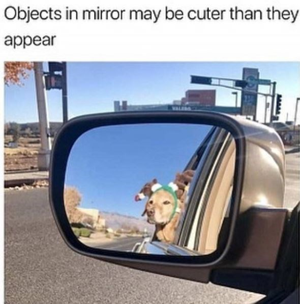 dog meme - Rear-view mirror - Objects in mirror may be cuter than they appear MAM