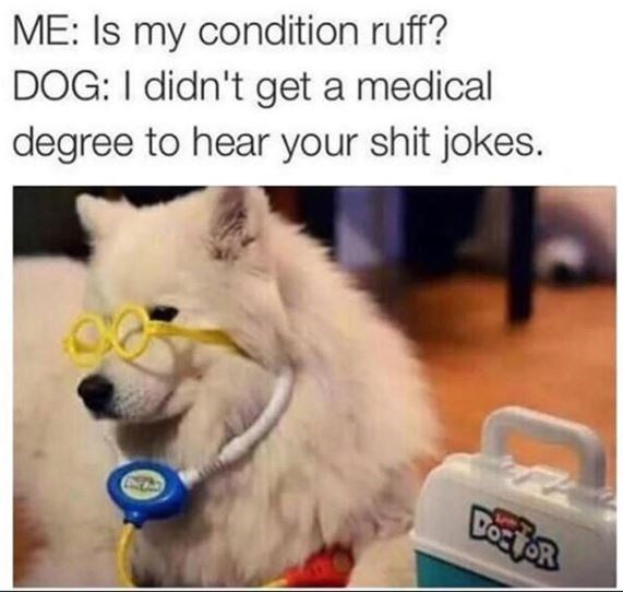 dog meme - Canidae - ME: Is my condition ruff? DOG: I didn't get a medical degree to hear your shit jokes.