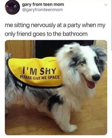 dog meme - Dog - gary from teen mom @garyfromteenmom me sitting nervously at a party when my only friend goes to the bathroom I'M SHY PLEASE GIVE ME SPACE