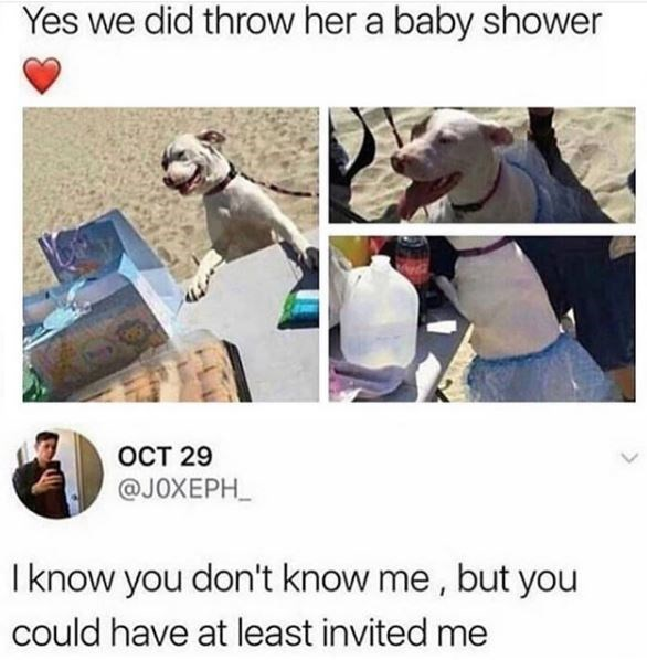 dog meme - Canidae - Yes we did throw her a baby shower OCT 29 @JOXEPH I know you don't know me, but you could have at least invited me