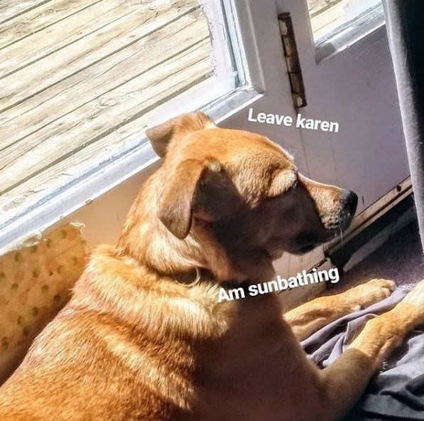 dog meme - Dog - Leave karen Am sunbathing