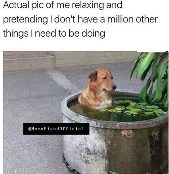dog meme - Canidae - Actual pic of me relaxing and pretending I don't have a million other things I need to be doing @MemeFiend0fficial