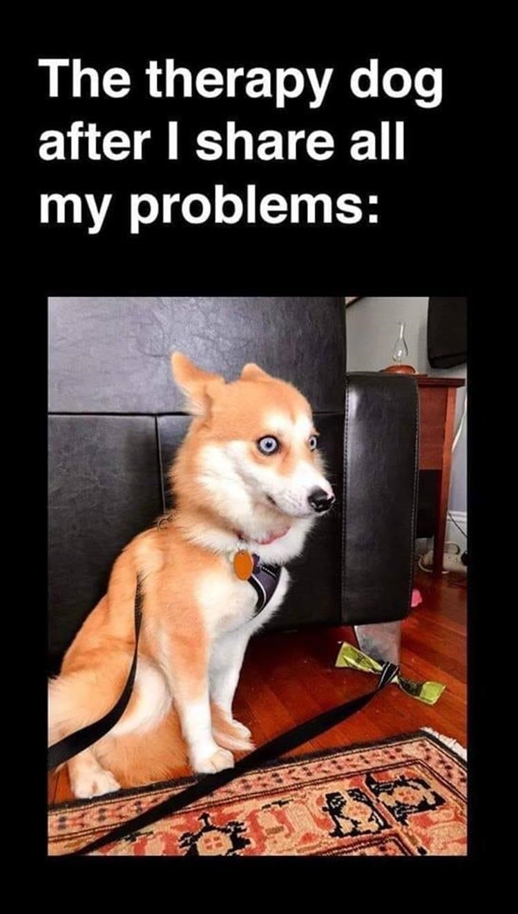 dog meme - Dog - The therapy dog after I share all my problems: