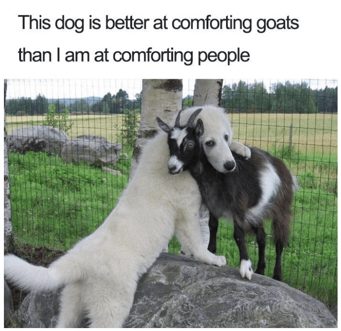 dog hugging a goat