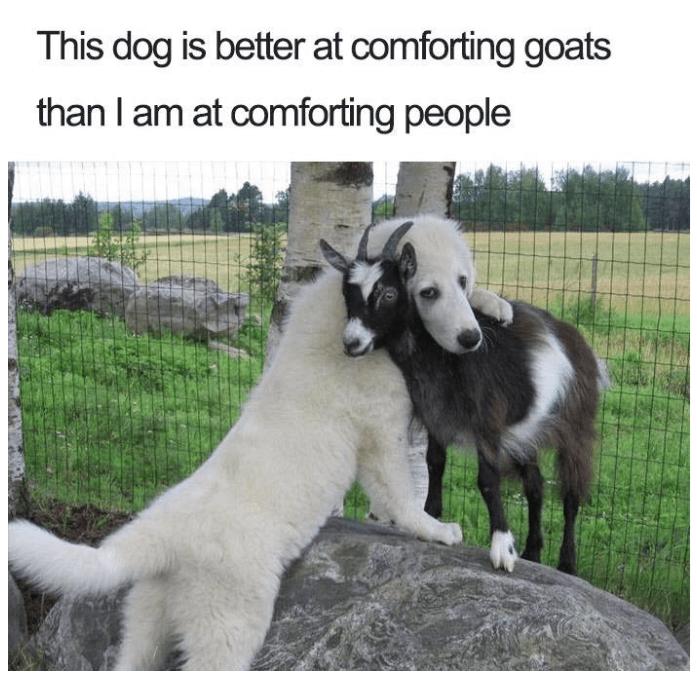 dog hugging a goat