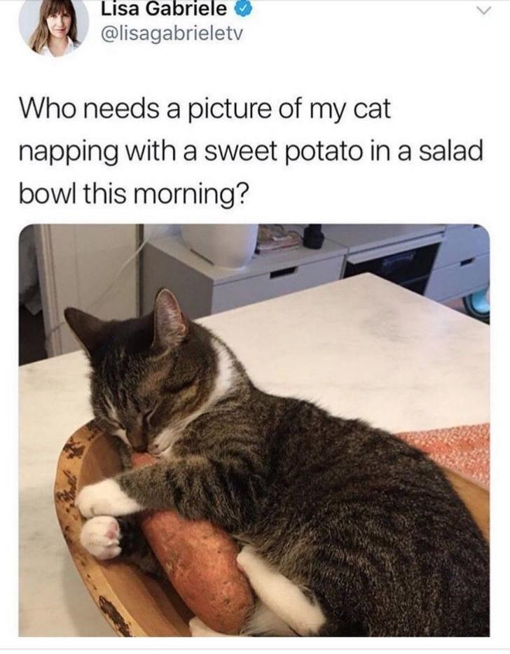 cat snuggling a sweet potato