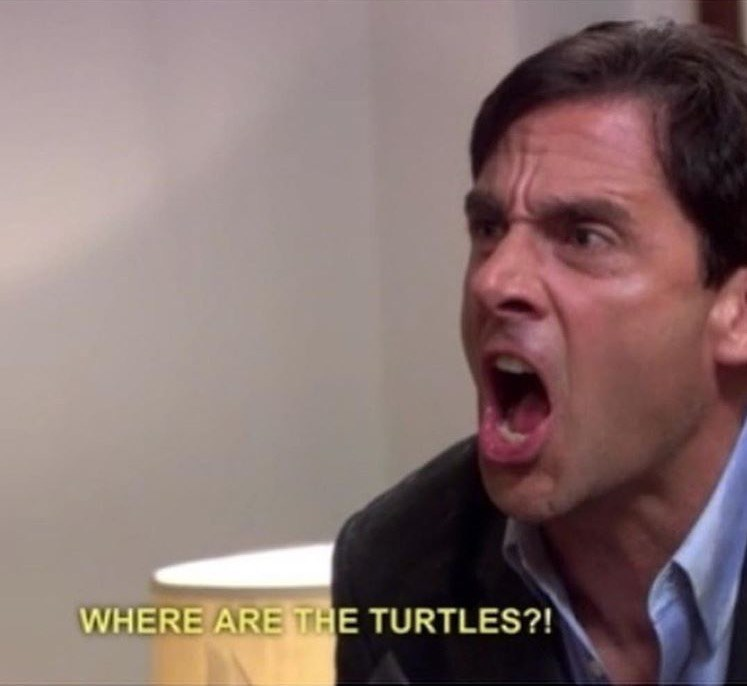 michael where are the turtles the office memes