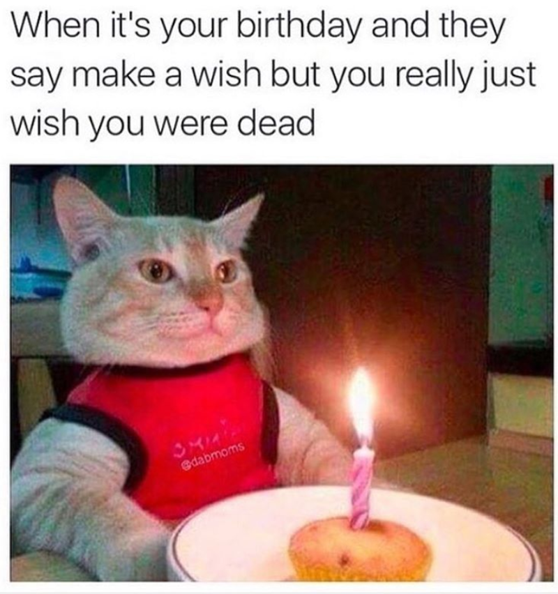 birthday meme - Cat - When it's your birthday and they say make a wish but you really just wish you were dead edabmoms