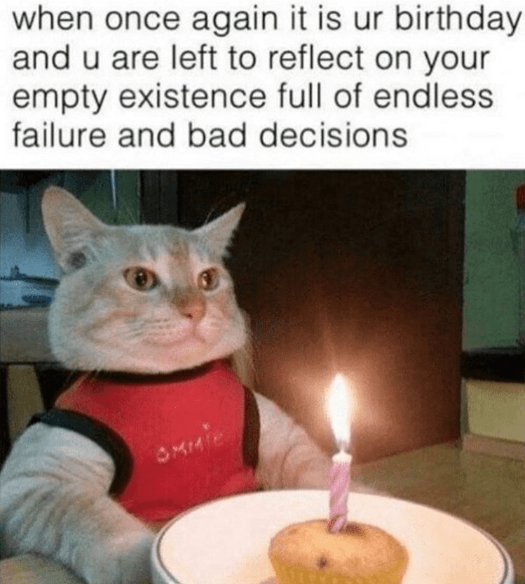 birthday meme - Cat - when once again it is ur birthday and u are left to reflect on your empty existence full of endless failure and bad decisions