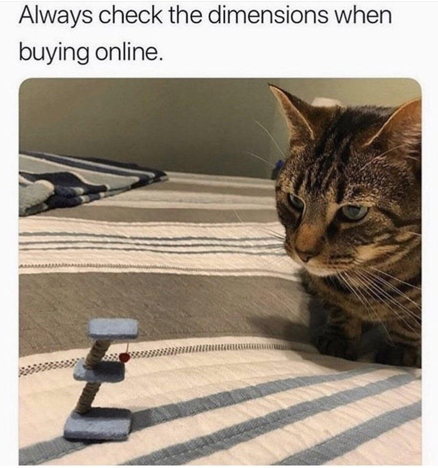 fail - Cat - Always check the dimensions when buying online.