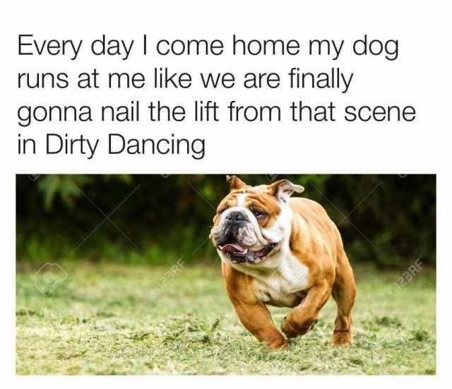 Meme - Dog - Every day I come home my dog runs at me like we are finally gonna nail the lift from that scene in Dirty Dancing 23RE 123RF