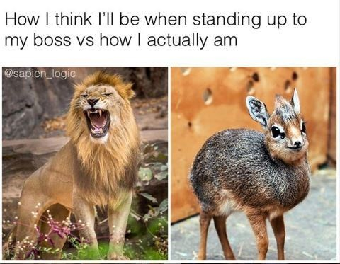"Meme - Wildlife - ""How I think I'll be when standing up to my boss vs how I actually am"""