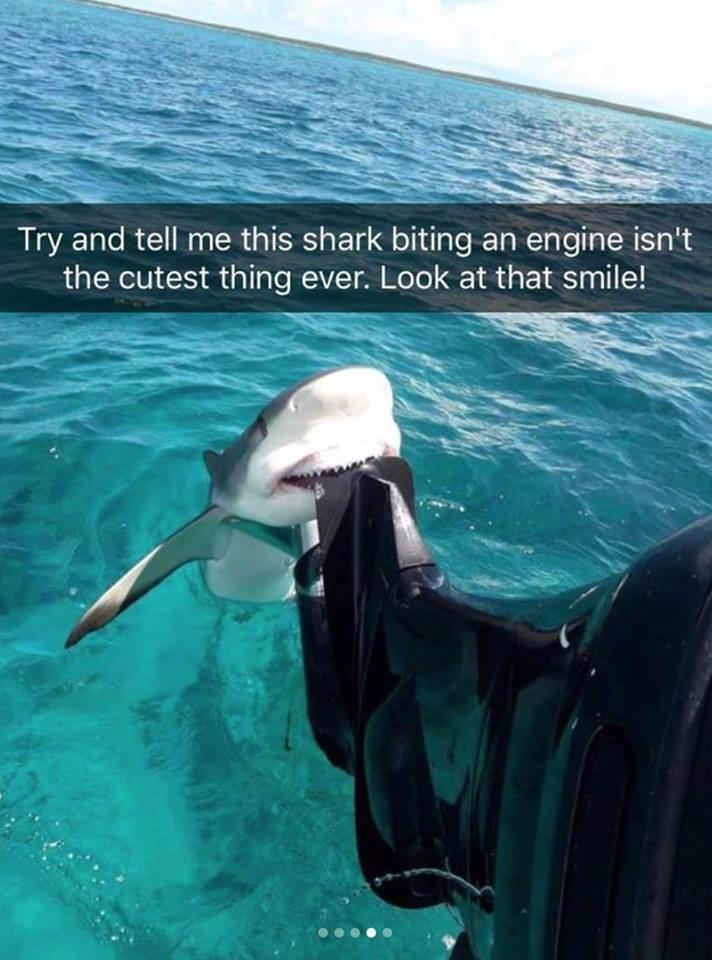 Meme - Snapchat photo of a cute shark biting a boat engine