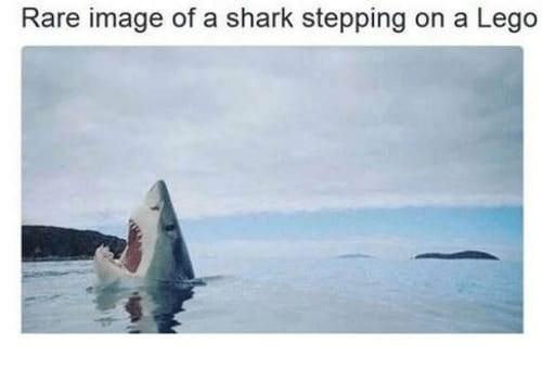 shark meme - Water - Rare image of a shark stepping on a Lego