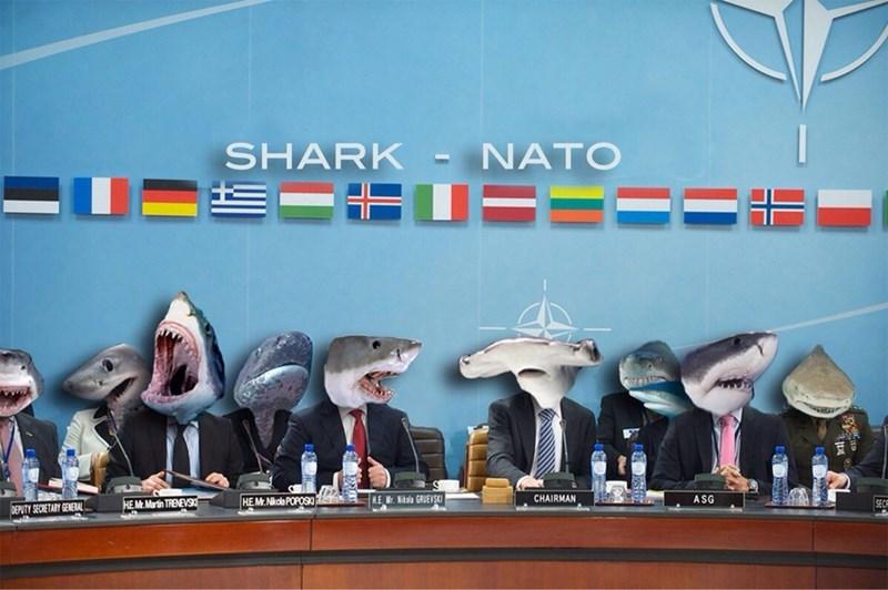 shark meme - SHARK- NATO Nkola POPOSK E Mr. Nitola GRUEVSKI CHAIRMAN ASG HE HE M.Martin TRENEVS SEC DEPUTY SECRETARY GENERAL