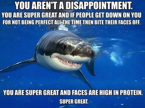 shark meme - Shark - YOU AREN'T A DISAPPOINTMENT. YOU ARE SUPER GREAT AND IF PEOPLE GET DOWN ON YOU FOR NOT BEING PERFECT ALLTHE TIME THEN BITE THEIR FACES OFF YOU ARE SUPER GREAT AND FACES ARE HIGH IN PROTEIN. SUPER GREAT