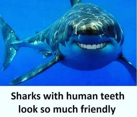 Meme - Shark photoshopped with human teeth