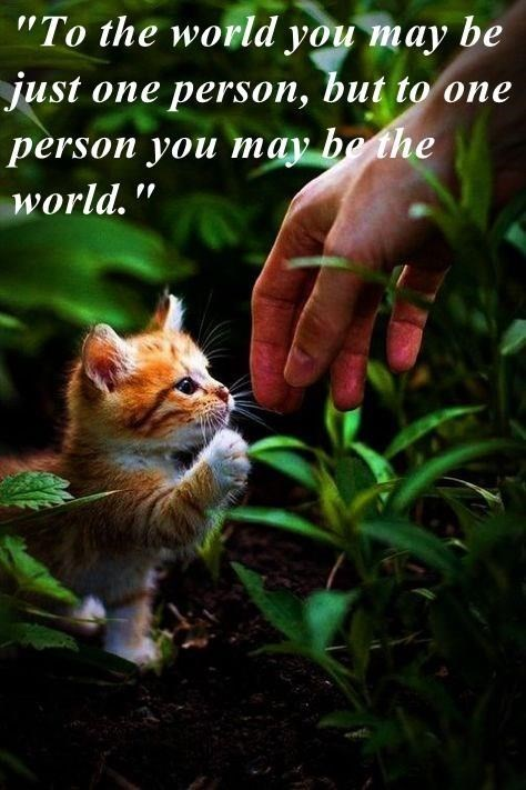 """funny cat - Cat - """"To the world you may be just one persson, but to one person you may be the world."""""""