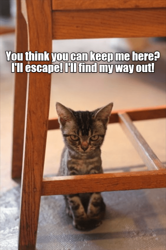 funny cat - Cat - You think you can keep me here? I'll escape! Il find my way out!