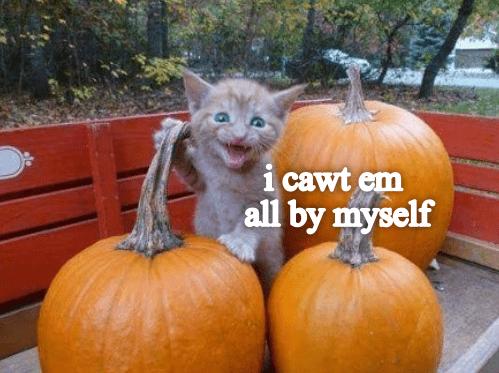 funny cat - Pumpkin - i cawt em all by myself
