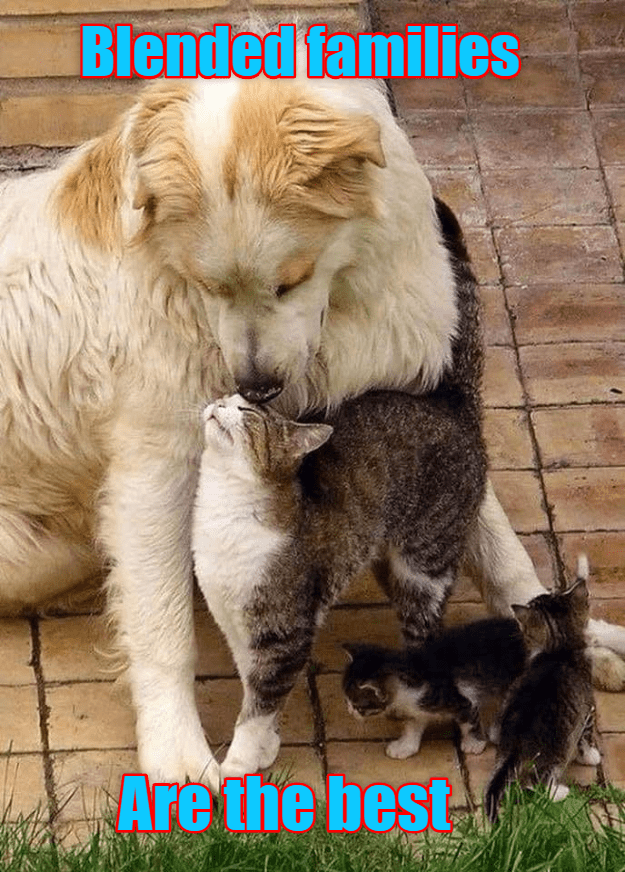 funny cat - Dog - Blended families Are the best