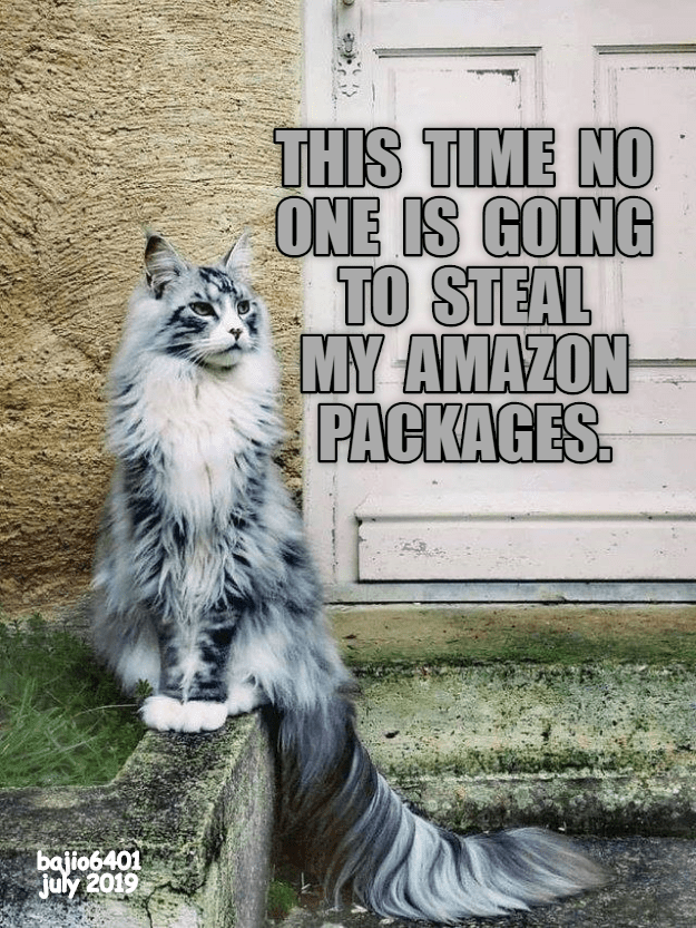 funny cat - Cat - THIS TIME NO ONE IS GOING TO STEAL MY AMAZON PACKAGES. bajio6401 july 2019