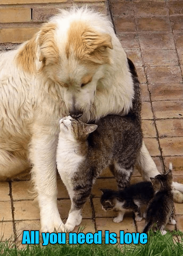 funny cat - Dog - Al youneed is love