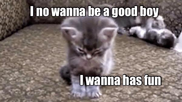 funny cat - Cat - I no wanna be agood boy Iwanna has fun