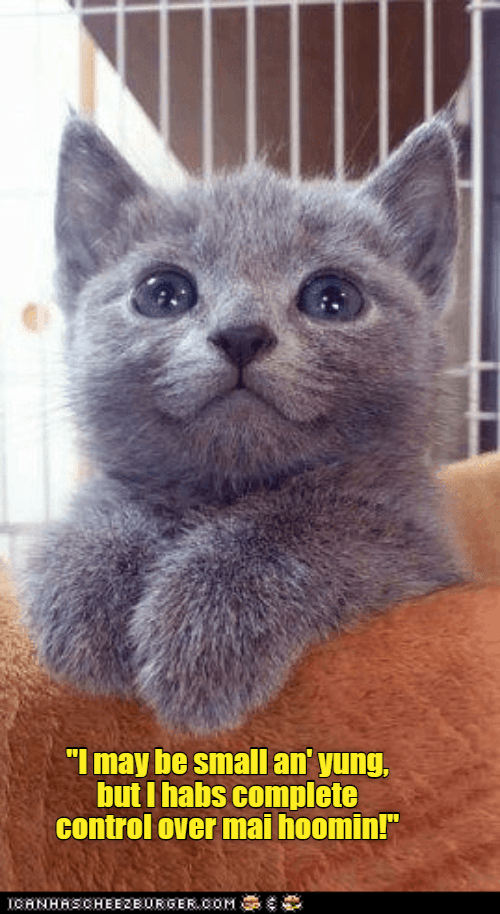 """funny cat - Cat - """"I may be small an' yung, but I habs complete control over mai hoomin!"""" ICHNHRSCHEEZEURCER.COM"""