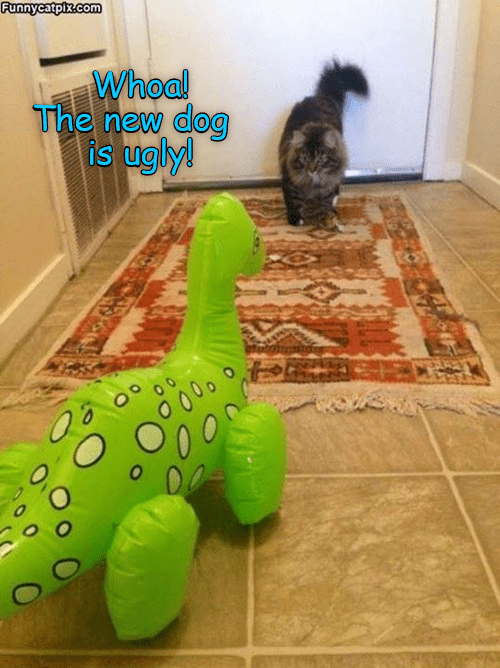 funny cat - Dog toy - Funnycatpix.com Whoal The new dog is ugly! 0 000 0 0.0