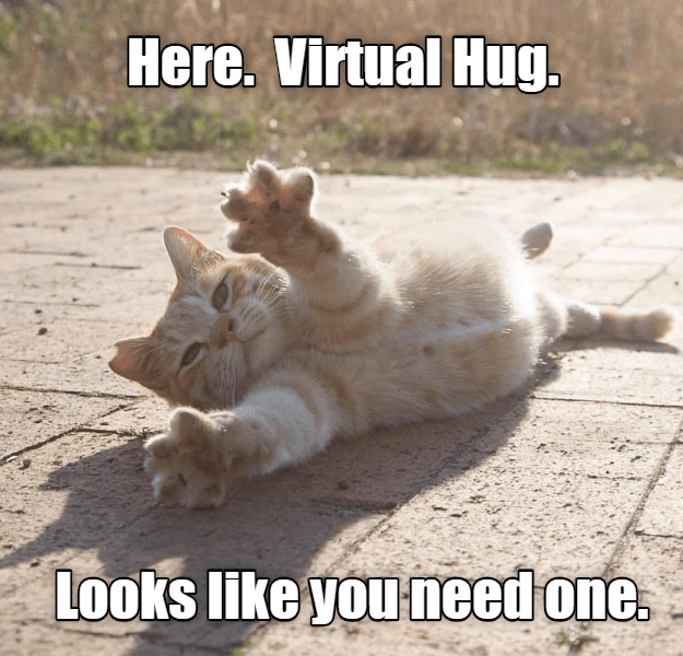 funny cat - Cat - Here. Virtual Hug. Looks like you need one