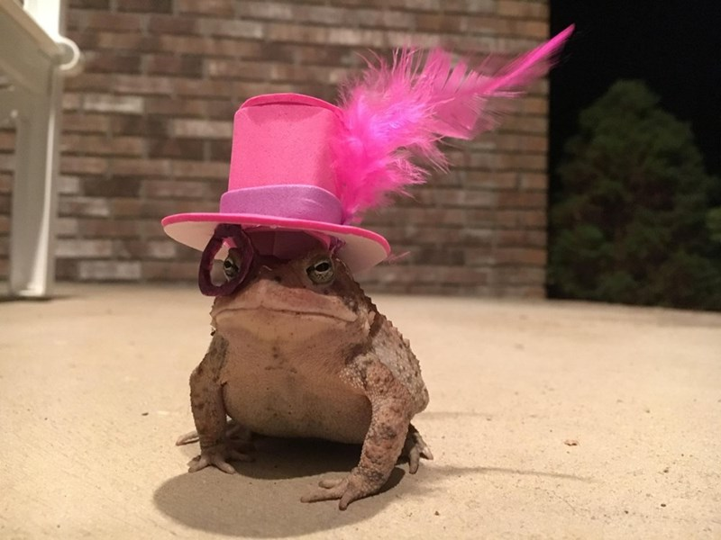 animals in hats - Pink