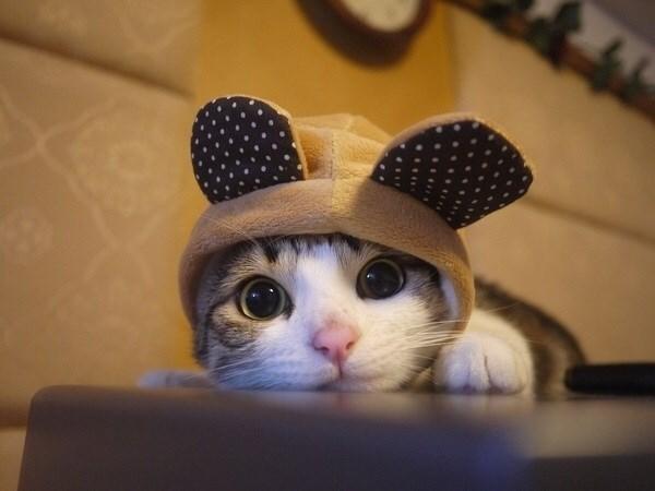 animals in hats - Cat