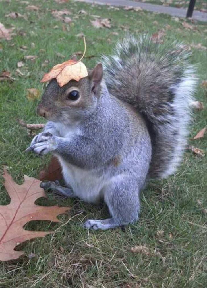 animals in hats - Squirrel