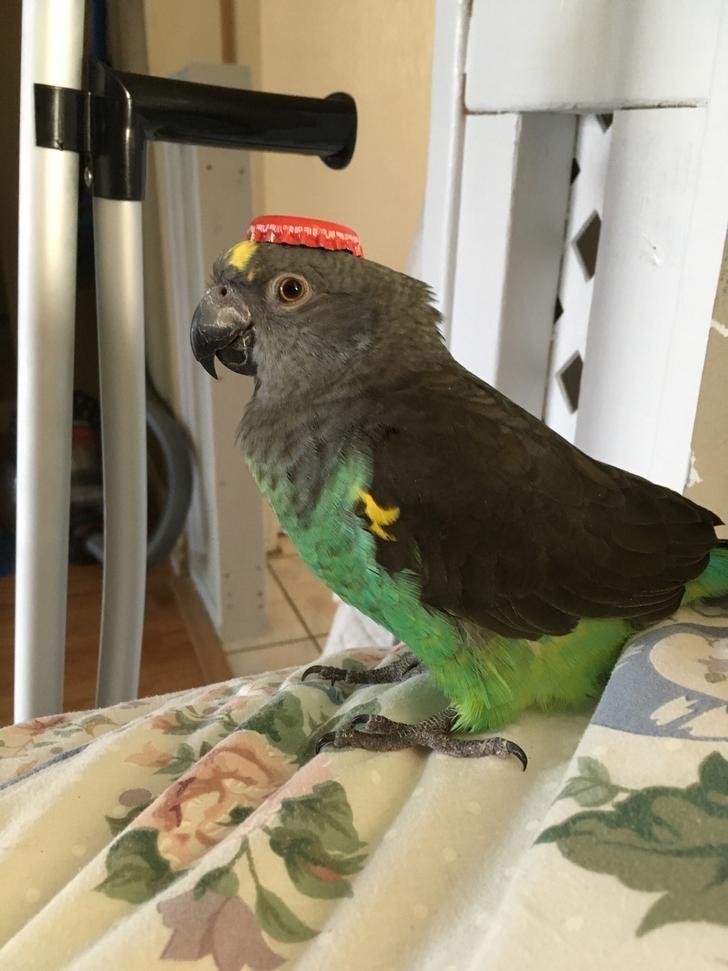 animals in hats - Bird - R
